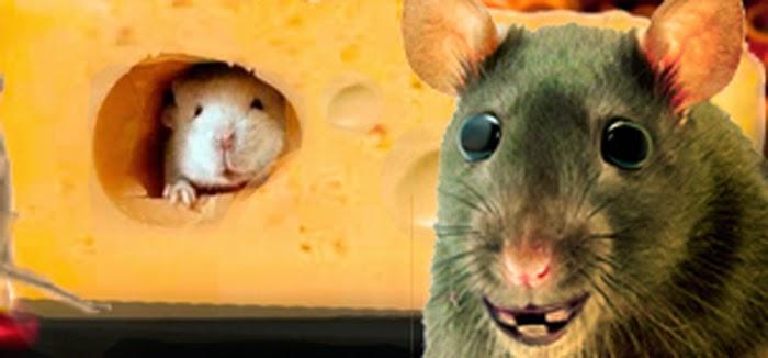la fábula de la rata