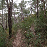 Track through bush to Plateau Pde (73509)
