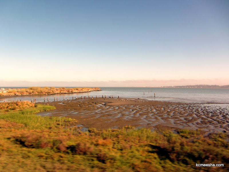 Checked Off My Bucket List: Coast Starlight