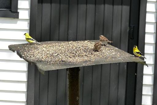 maud  et ses oiseaux 2011%252520P1030422