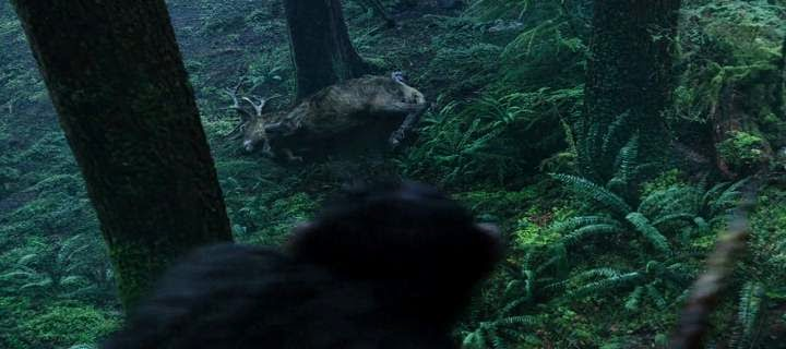 Screen Shot Of Hollywood Movie Dawn of the Planet of the Apes (2014) Download And Watch Online Free at alldownloads4u.com