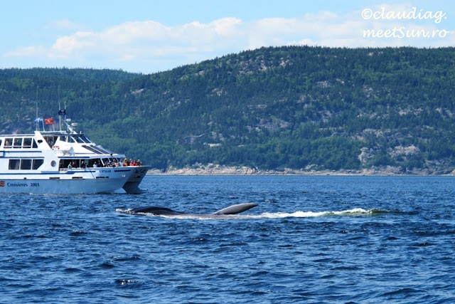 Croaziera Balene in St Lawrence - whale-watching