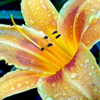 Лицо цветы масла