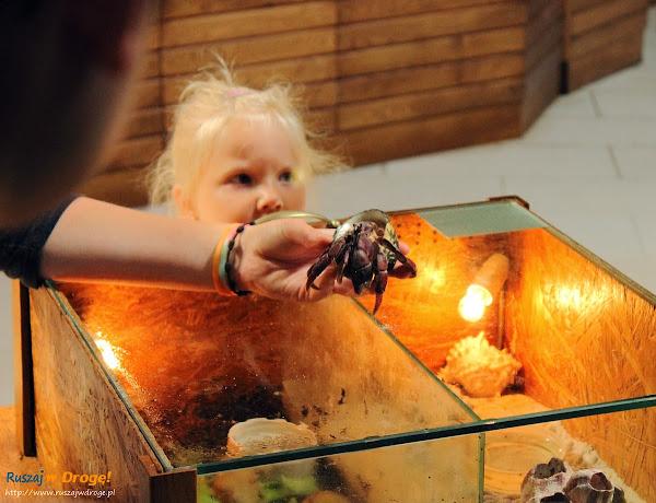 Tuchlino Park Egzotycznych Zwierzaków - atrakcja dla dzieci