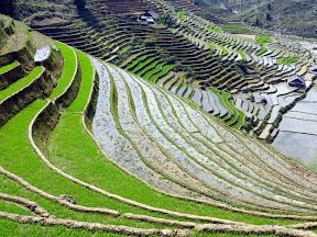 Sapa, trek avec les Hmong