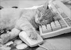 Кот и ЖК-монитор...