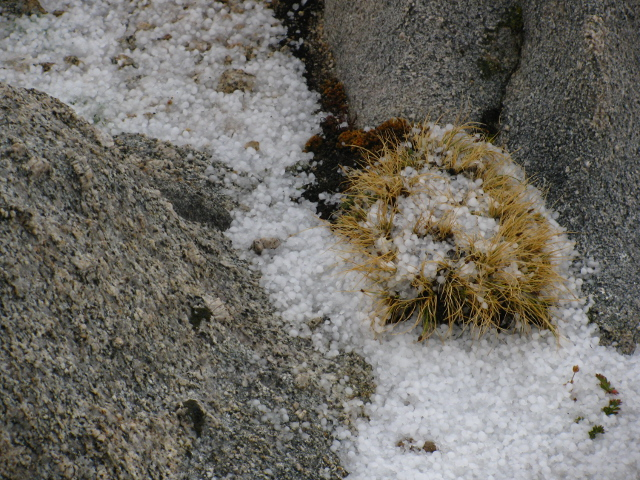 hail stones in the dried grasses