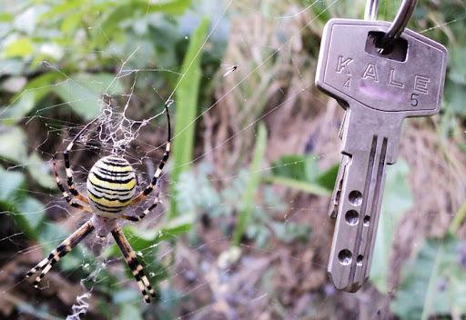 Ядовитые пауки Украины: http://blog.i.ua/community/5307/1230926