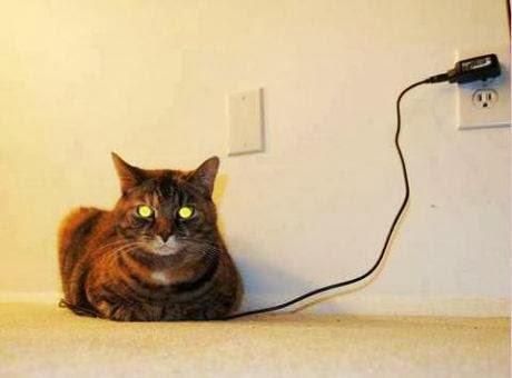 Gato a carregar a bateria | Charging Cat