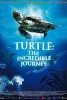 Turtle The Incredible Journey - Hành trình vĩ đại của loài rùa