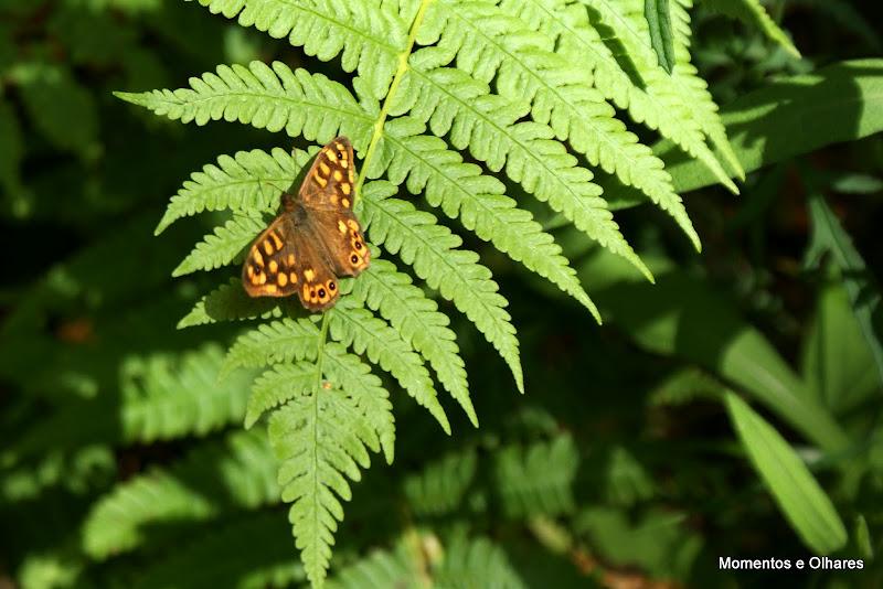 El caminu encantau, borboleta