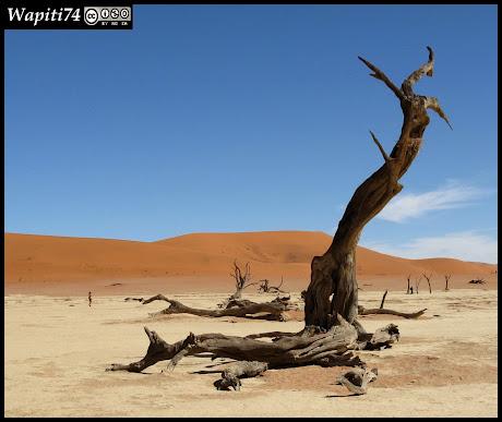 Balade australe... 11 jours en Namibie - Page 2 IMG_0816