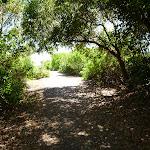 Shadow on coastal walk track in Caves Beach (387608)