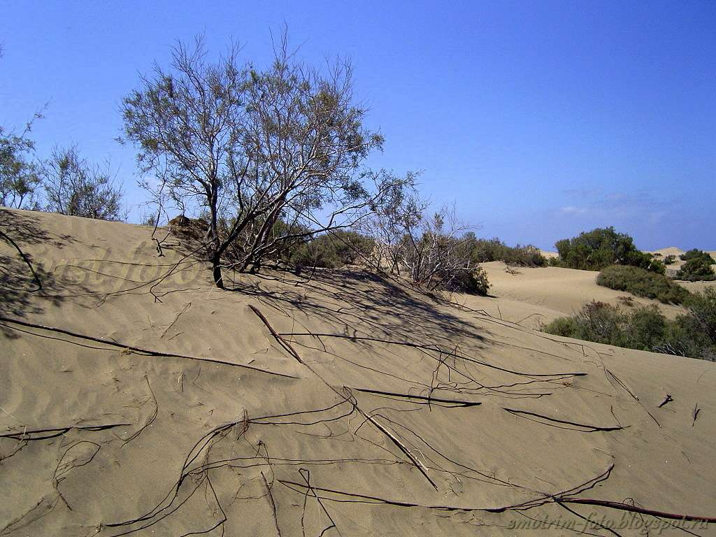 Растения в дюнах фото
