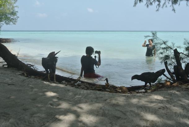 fauna de la isla de karimunjawa
