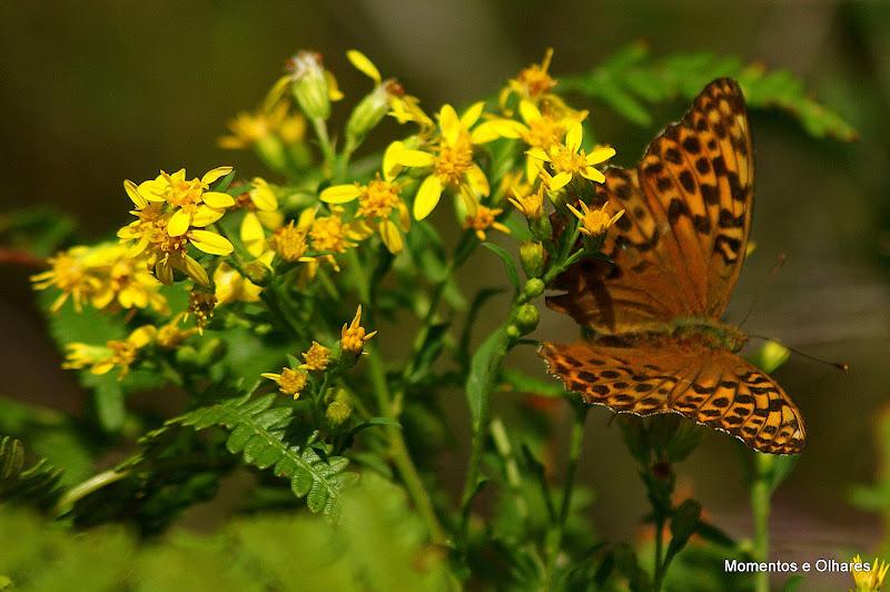 Borboleta nas flores silvestres