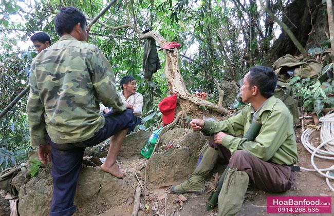Khai thác Mật Ong Rừng ở Lai Châu - 13