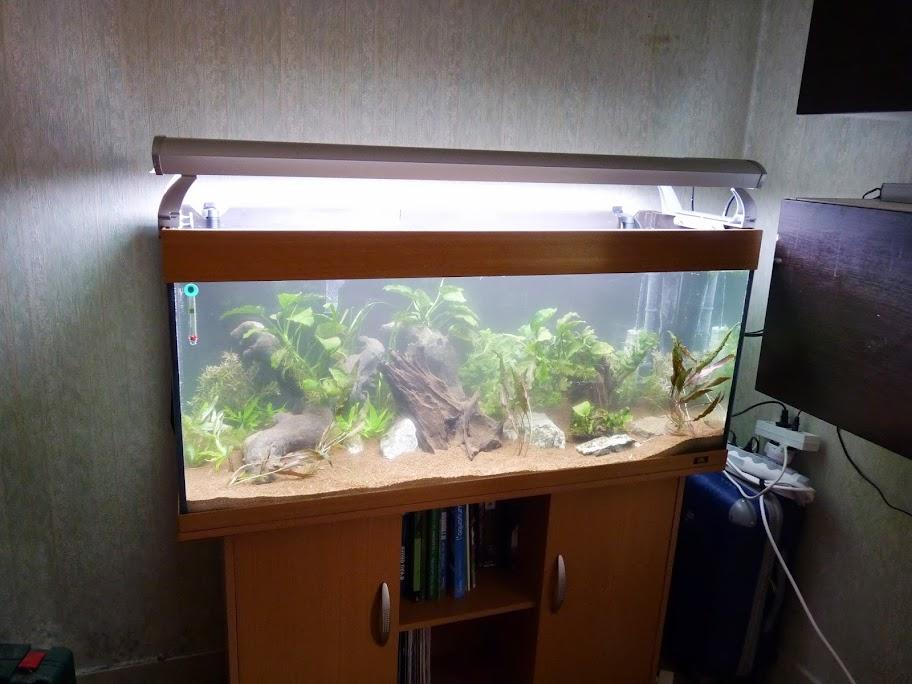 Ma petit histoire Aquariophile de 2009 à aujourd'hui  P1040109