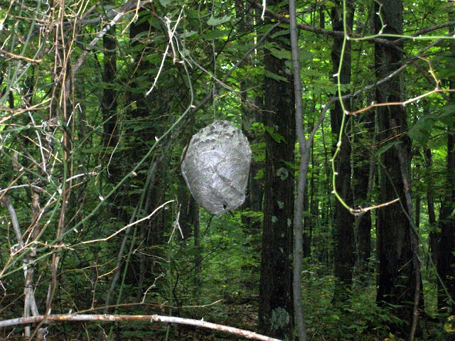 Hornet's Nest at Lionheart Adventure Race