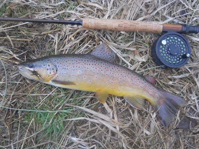 Brown on a small bugger