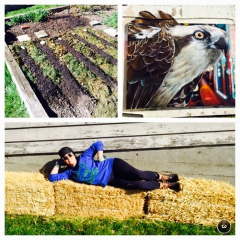 Row cover, Burien, straw bale gardening - cultivatedrambler.com