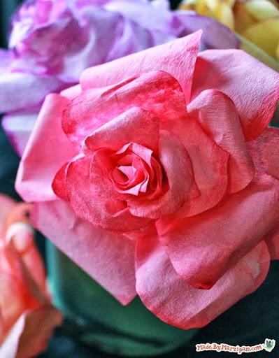 rosa de filtro de café