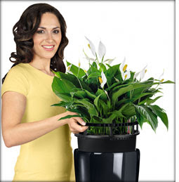Rondo self-watering office planters