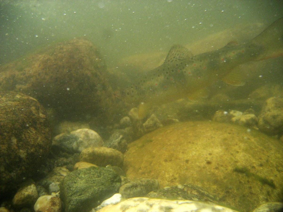 Балканки под вода