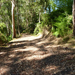 Trail in Blackbutt Reserve near Lookout Road (400540)