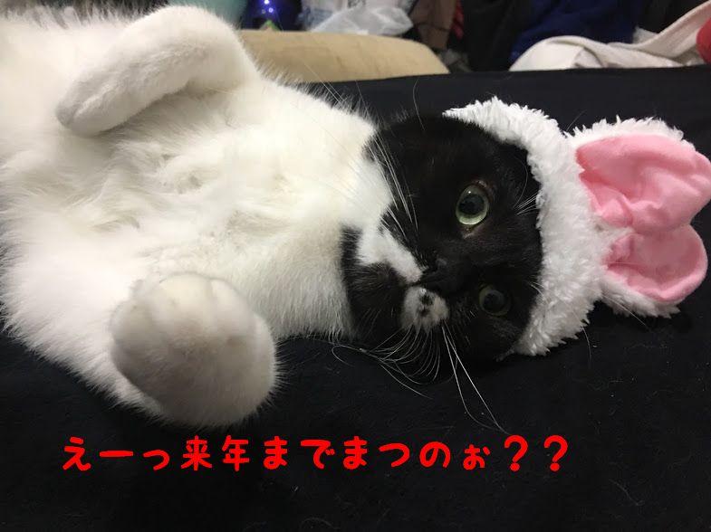 【プレゼントに】猫好きさんに捧げる!SNSで流行中おすすめ猫コスメ2017