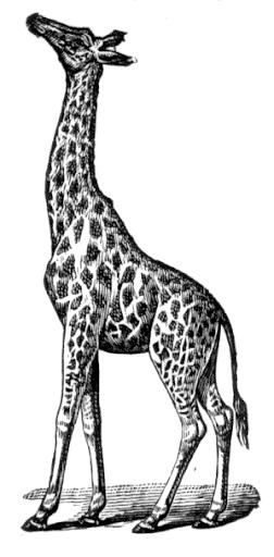 maj07_giraf%252520%2525281%252529.png