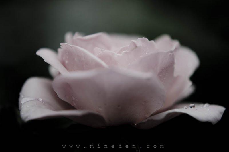 Astrid Lindgren ros
