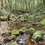 A rocky  creek on the Great North Walk (360560)