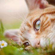 Смерть своего кота сон