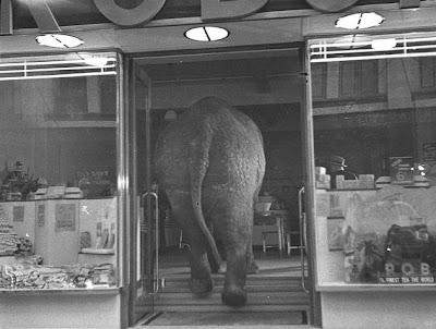 Elefante tomando el te