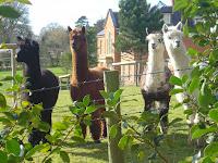 Friends in Prestbury