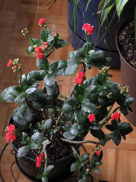 Mes petites plantes grasses et cactées IMG_0301