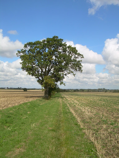 The Hereward's Way near Little Downham