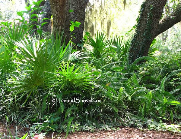 Do Ferns Grow Under Oak Trees : Hoe and shovel good fern bad
