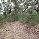 Track nearing Mambara Trk (82867)