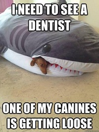 Canine dentist - canine dental care at Dorsetdog.com