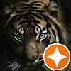 Tiger- Corgiluv74
