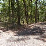 Track intersection in Blackbutt Reserve (401335)
