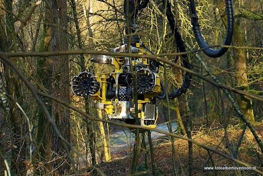 Houtoogst in de bossen van overloon 17-01-2012 (10).JPG