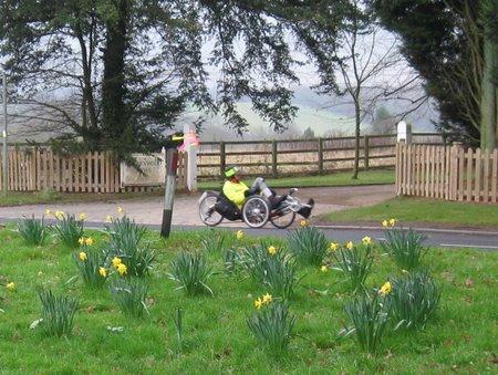 """Daffodils"