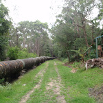 Through the bush (122155)