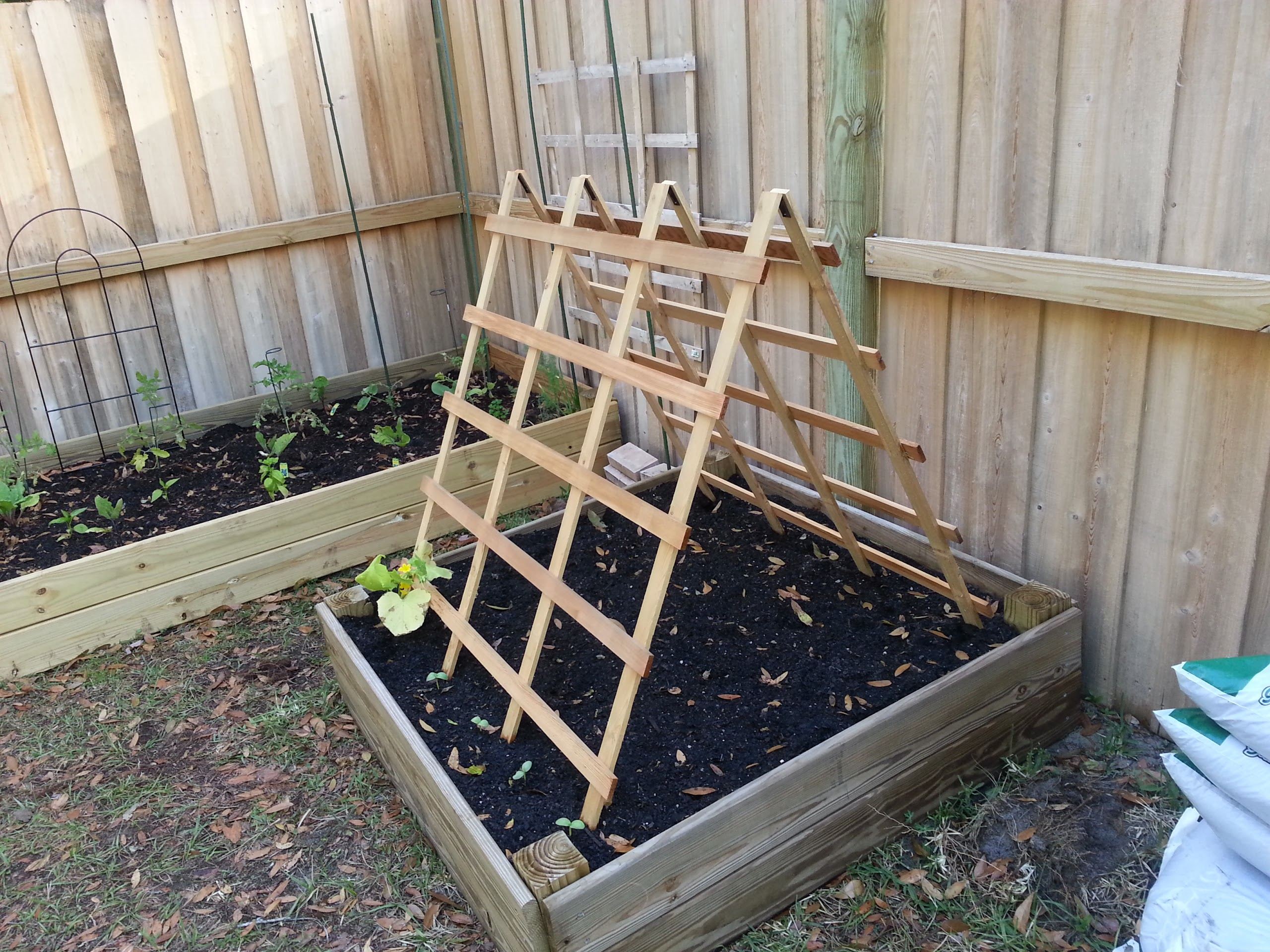 an a frame trellis has been added to the original bed which was relocated to a different area of the yard in the a frame bed are pickling cucumbers and