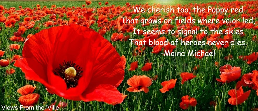 Memorial Day Red Poppies
