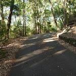 Trail in the Blackbutt Reserve (399406)