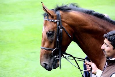 Race horse at Royal Ascot